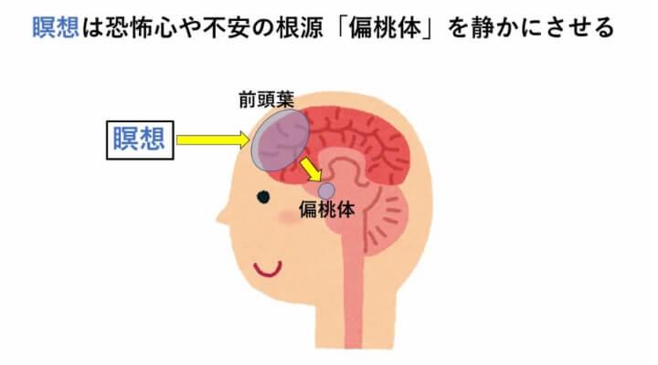 瞑想は前頭葉を活性化して偏桃体をコントロールする効果がある