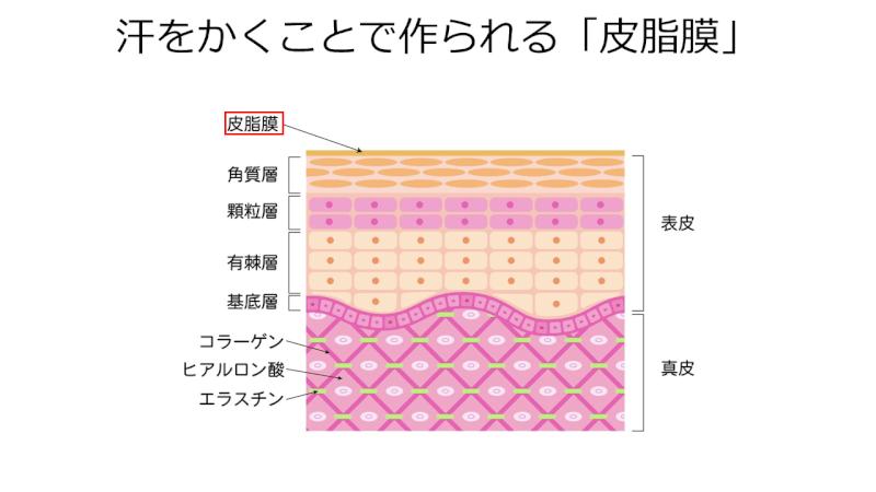 皮脂膜のバリア機能で美白効果も得られる