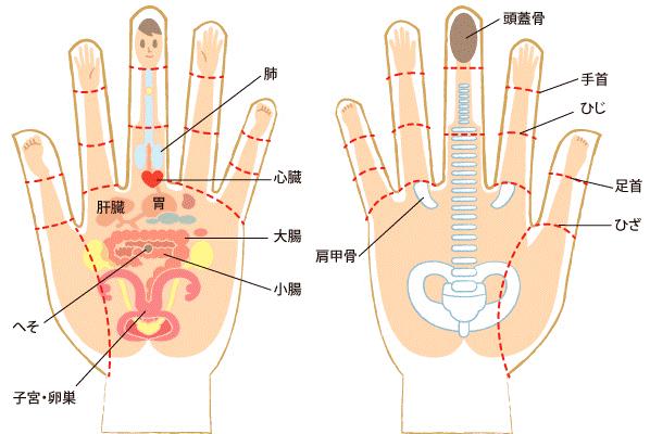 指ヨガの効果は身体の歪み改善だけでなく内臓調整もできる