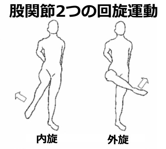 股関節の内旋と外旋の動き