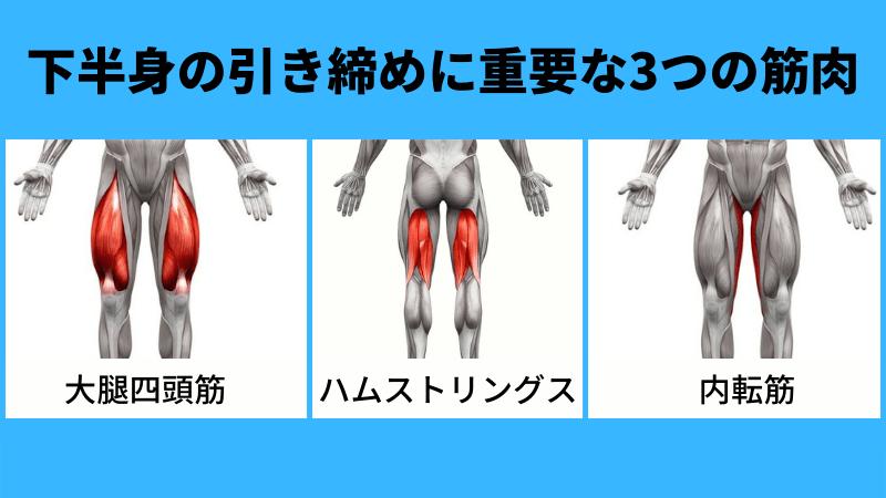 大腿四頭筋とハムストリングス、内転筋のイメージ